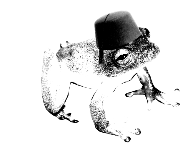 Small tree frog wearing a fez