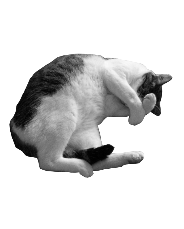 Barney - black and white picture of a cat lying down with its paws over its face