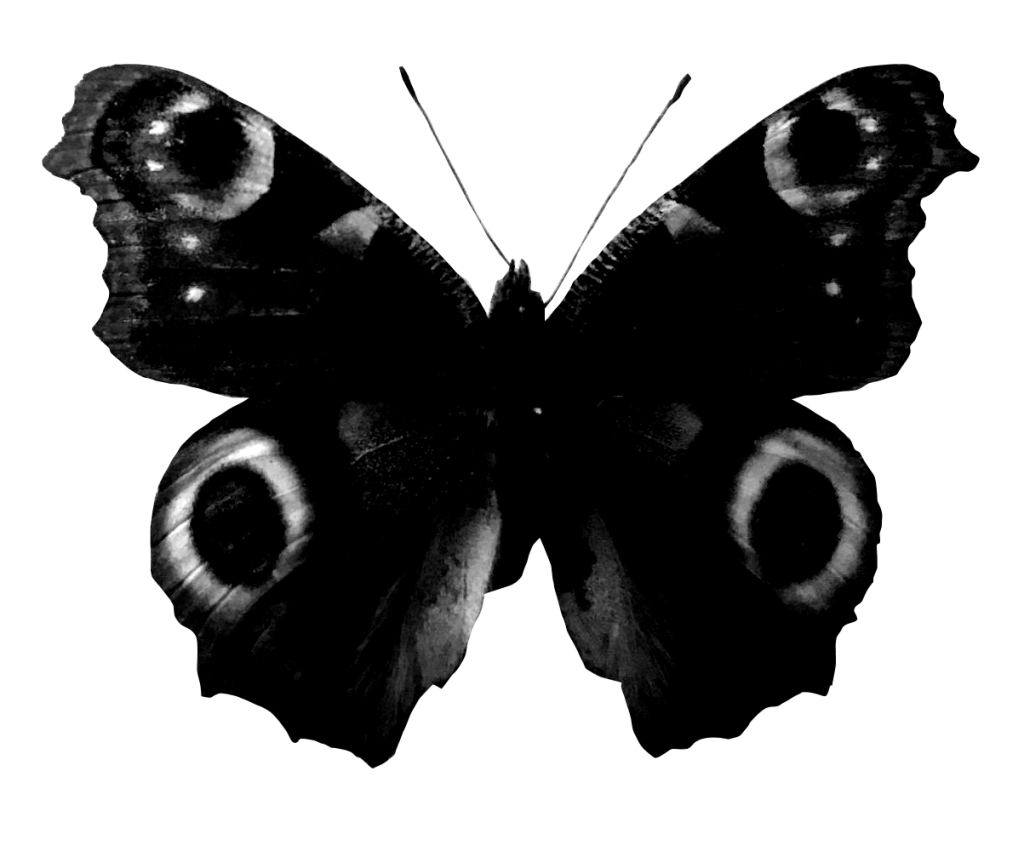 grayscale butterfly