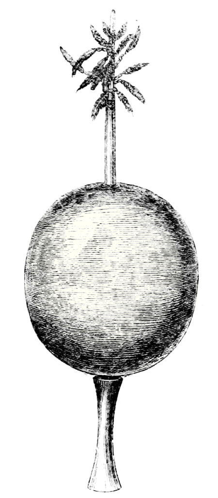 A long item with a round, central body, and a stick emerging from each hemisphere. The top stick has some form of leaf coming out of the top